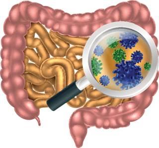 бактерии под лупой