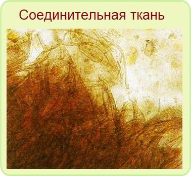 соединительная ткань в кале